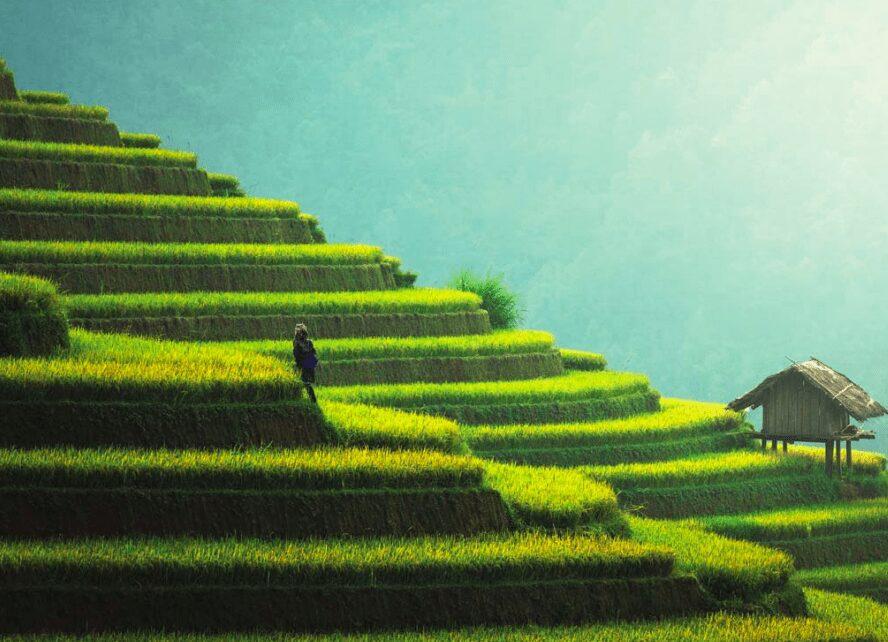 agricultura blockchain