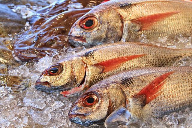 Galicia blockchain vottun pescado