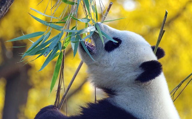 Bamboo defi NFTs