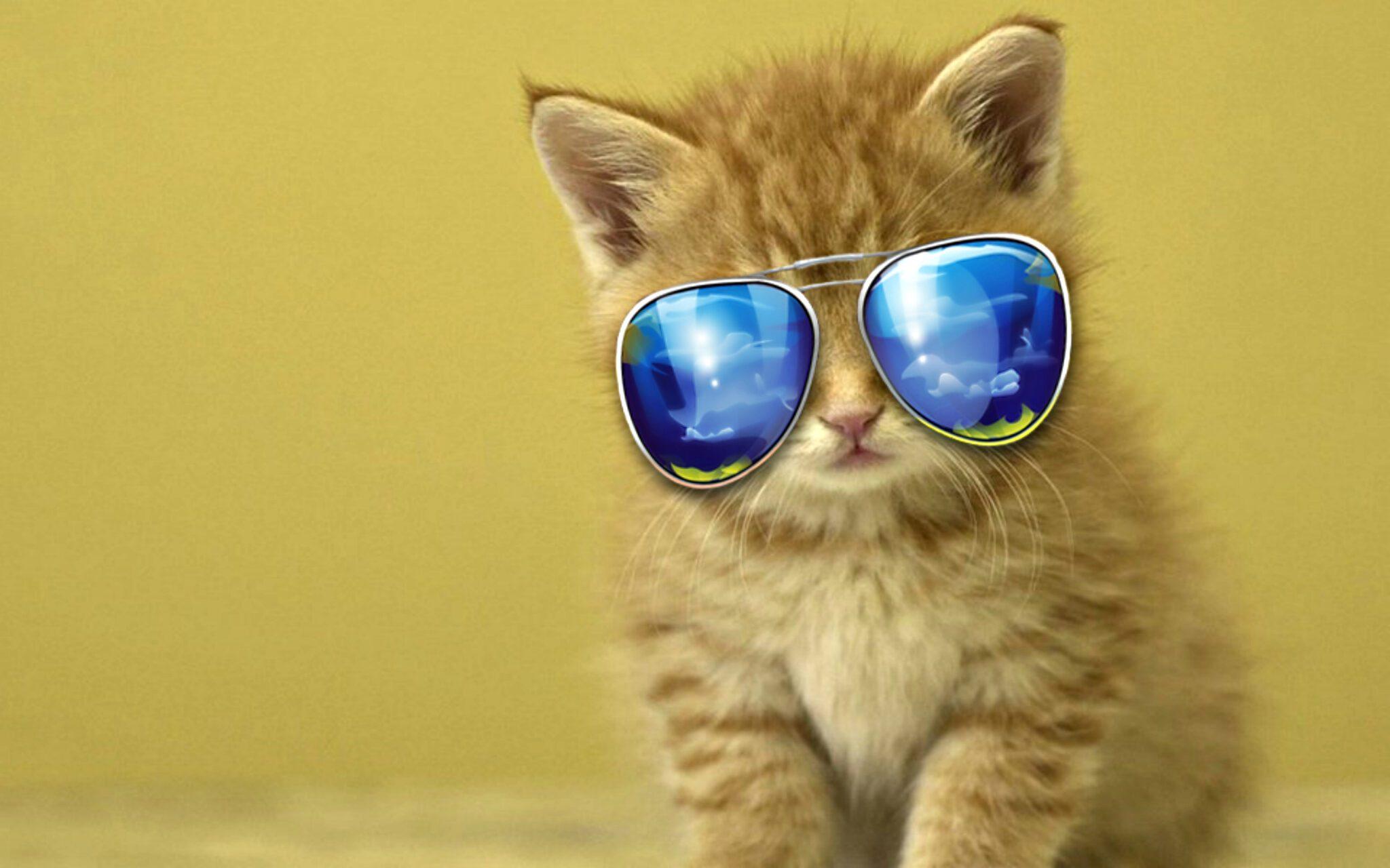 NFT de Cool Cats se revalorizan después de colaborar con TIME